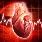 Сколько раз в день бьется сердце человека?