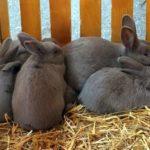 Как начать разводить кроликов ?