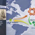 Когда началась Треугольная Торговля?