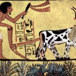 Были ли египтяне черными?
