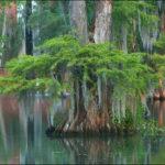 Как покупка Луизианы повлияла на Америку?