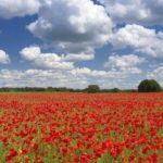 Как закончилась Первая мировая война?